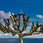 De 5 mooiste uitzichten op Azoren!